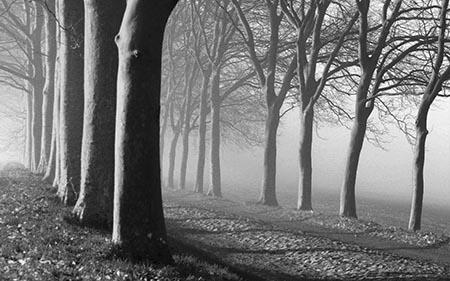 דרך - עצים