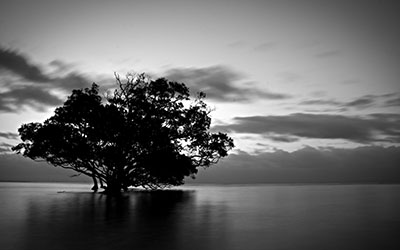 עץ במיםעץ במים _tree-in-water-black-and-white-sky-tree-water