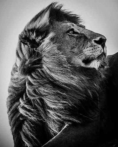 אריהאריה