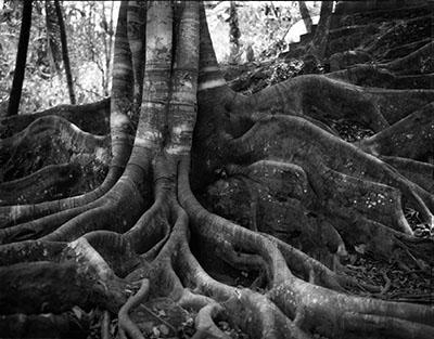 גזע עץגזע עץ