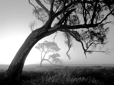 עץעצים