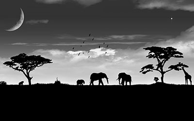 פילים_savannah-sky-elephant-night-art-moon