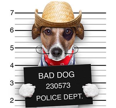 כלב  מסדר זהוי כלב  מסדר זהוי    _Dogs_Jack_Russell