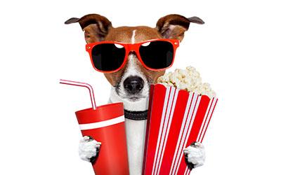 כלב בקולנועכלב  מסדר זהוי