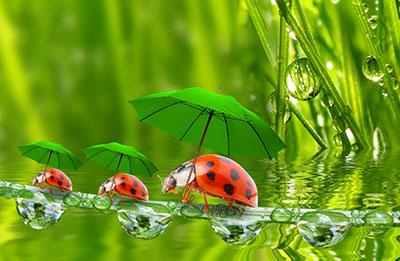 חיפושיות עם מטריה