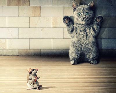 ידיים למעלהחתול