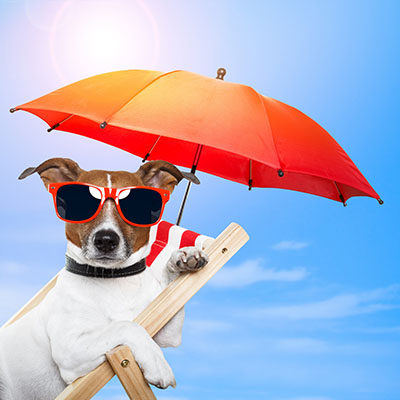כלב על כיסא נוח-puppy-sun-summer-beach-sunglasses-umbrella-vacation