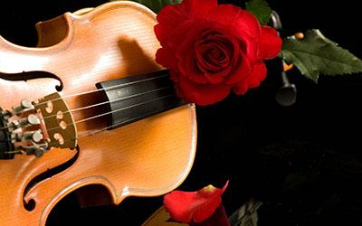 Violin Red Rosesמוזיקה -  מוסיקה   _