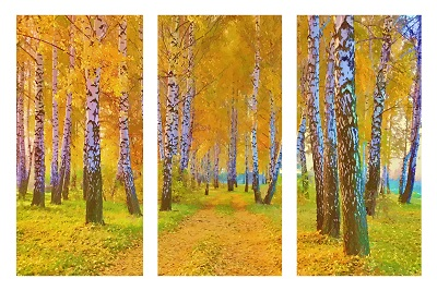 עצים ביער  - תמונה מחולקתעצים ביער