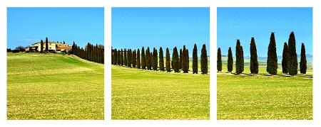 טוסקנה  - תמונה בחלקים   עצים