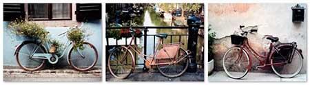 אופנים  אופניים     סט תמונות