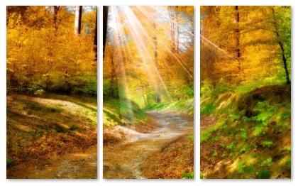 יער - תמונה בחלקיםיער