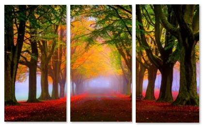 שביל ביער - תמונה בחלקיםשביל ביער  עצים
