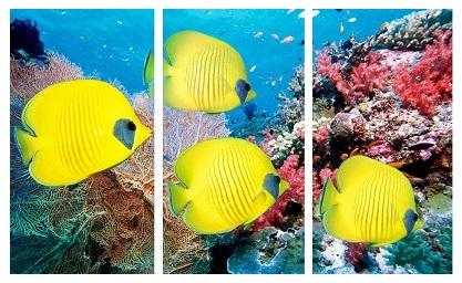 דגי פרפר - תמונה בחלקיםדגי פרפר