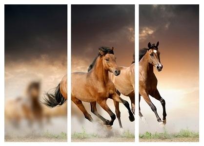סוסים - תמונה בחלקיםסוסים