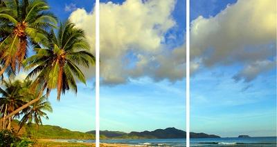 חוף טרופי  Tropical Beach