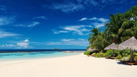 חוף טרופיחוף טרופי  _palm_trees_on_ocean_coast