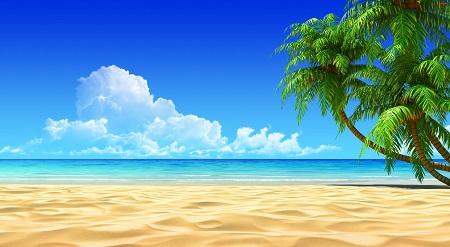 חוף טרופי חוף טרופי ים   _palm_trees