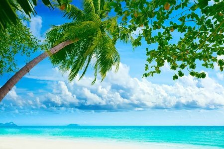 חוף טרופי  Tropical Beachחוף טרופי    beautiful-tropical-palm-tree-sea-shore-nature