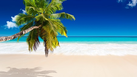 גן  עדן טרופי גן  עדן טרופי  tropical_paradise_sea_palm_beach_sunshine