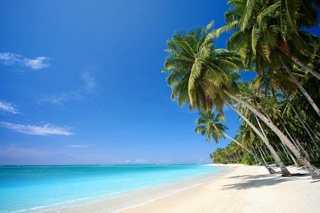 חוף ועצי דקלחוף ועצי דקל  palm-trees