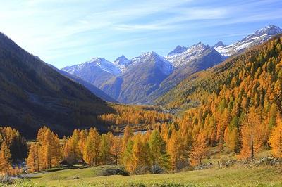 נוף הריםנוף הרים עצים  יער