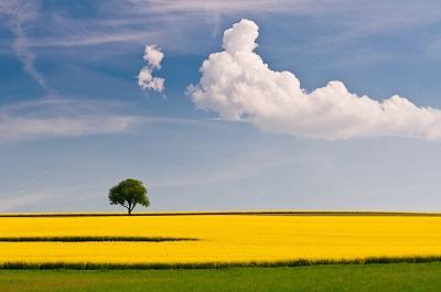 נוף ועץ נוף ועץ תמונות של שדות צילומים