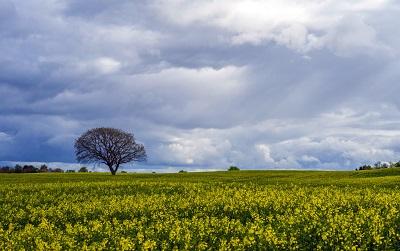 ים צהוב ועץ ים צהוב ועץ תמונות של שדות צילומים