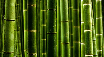 קנים bambooקנים bamboo