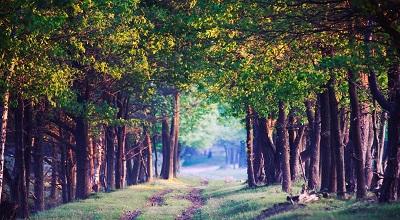 שביל ביער beautiful forest pathשביל ביער beautiful forest path   עצים