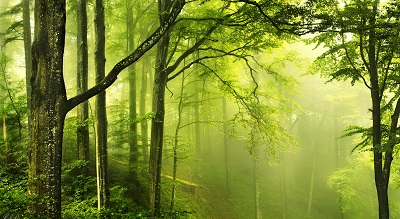 יער ירוק  beautiful green forestיער ירוק  beautiful green forest  עצים