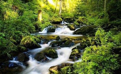 היער השחור black forest germanyהיער השחור black forest germany  עצים