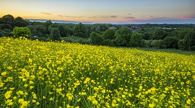 נוף צהוב   תמונות של שדות צילומים