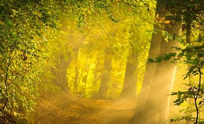 יער יער enchanted_forest עצים