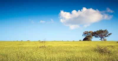 שדהשדה