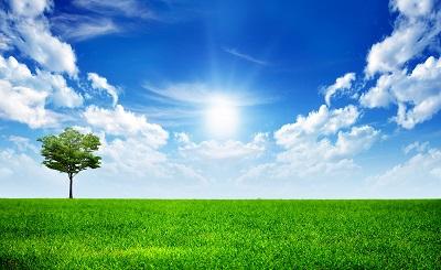 שדה ירוק  green nature