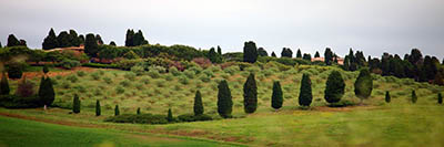 נוף כפרינוף כפרי  טוסקנה  איטליה