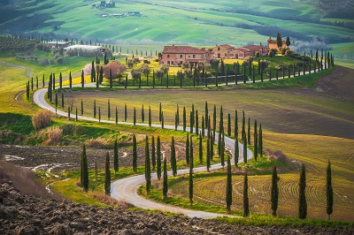 טוסקנה איטליה  Italy Tuscanyעצים טוסקנה איטליה  Italy Tuscany
