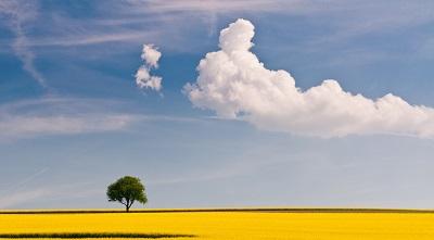 שדה צהוב ועץשדה צהוב ועץ   תמונות של שדות צילומים