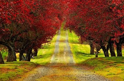 עצים אדומיםעצים אדומים