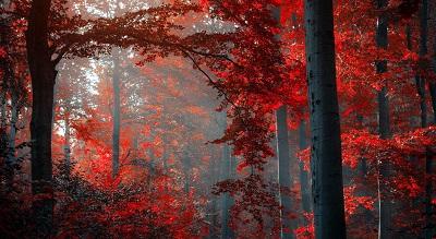 יער אדוםיער אדום  עצים