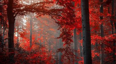 יער אדוםיער אדום