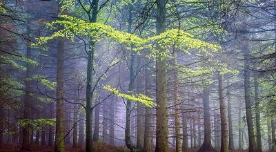 spring forest in fog spring forest in fog