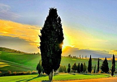 sun of tuscany sun of tuscany