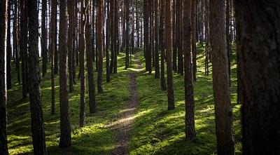 יעריער   the forest  עצים