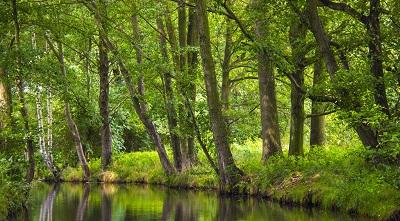 שלווהשלווה  the_spreewald tranquility