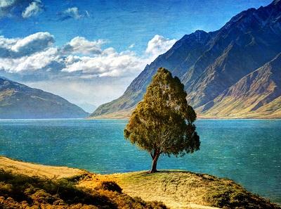 עץ ליד האגם tree by the lakeעץ ליד האגם tree by the lake