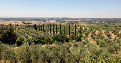 tuscany viewתמונות של שדות צילומים  כרמים