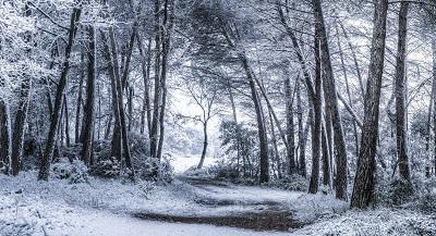 שלג לא צפויעצים יער שלג לא צפוי _unexpected_snowfall