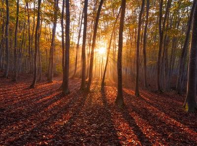 זריחה ביער warm sunrise זריחה ביער warm sunrise    עצים